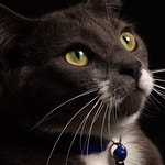 Oliver_close_up_macro_black_background_DSC09577b