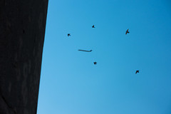 Up Up & Away (Sean Davis) Tags: birds airplane memphis wiseacre