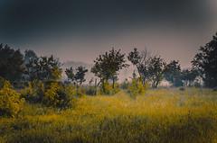 Fog in the park (Photographer Philip Pena) Tags: park morning lake man men fog forest river island dawn pena kazakhstan philip aftertherain morningfog  qostanay rudnyy rydnyy rydny  philippena photofrpaherphilippena