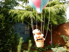 And we have lift off! (Sa//y) Tags: bear balloons bristol teddy balloonfiesta hotairballoons 2014 ashtoncourt longashton