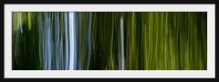 matrix forest I (Andrew C Wallace) Tags: panorama motion blur australia melbourne victoria bamboo royalbotanicgardens matrixforest