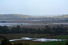 Wilson's River floodplains (dustaway) Tags: landscape haze flooding earlymorning australia nsw australianlandscape northernrivers richmondvalley morninglandscape australianweather wyrallah wilsonsrivervalley southgundurimba