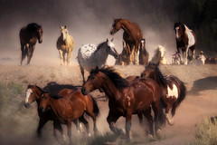 The Wind Of Heaven (karenhunnicutt) Tags: summer cowboys roadtrip grandtetons wildwest jacksonholewyoming minneapolisphotographer karenhunnicutt karenmeyer karenhunnicuttphotographycom wyomingtourism minneapolisfineart karenhunnicuttmeyer artandsoulstudios wyomingranches horsescowboylife