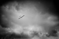Glide. Keep gliding. (derek_michalski) Tags: sky bw nature monochrome flying nikon naturallight glider d800 biancoynegro