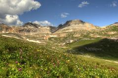 wildflowers on Columbine trail2 (maryannenelson) Tags: summer mountains southwest green colorado silverton scenic vista wildflowers peaks columbinelake