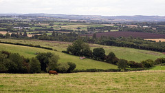 DSC04143 (SteveFE) Tags: english countryside cow cattle hill herefordshire pastoral bucolic 28 industar61 orcop 53mm
