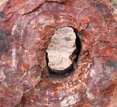 petrified donut (J Blough) Tags: arizona nps petrifiedforestnationalpark petrifiedwood
