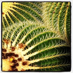 In the #botanical #garden again. Found... (Parallel_Dreams) Tags: cactus plant nature garden botanical university pretty sting natur pflanze bloom mainz garten kaktus kakteen bl gutenberg universit botanischer stachel uploaded:by=flickstagram instagram:photo=7905120113236348291182947044 instagram:venuename=botanischergartenmainz instagram:venue=251519637