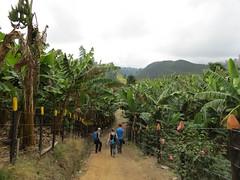 Onderweg naar de koffieplantage