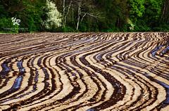 s'Heerenberg, NETHERLANDS (Yannick-R) Tags: netherlands for spring potatoes sand future fields plowing yannick corns sheerenberg rivoire