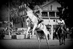 El overo (Eduardo Amorim) Tags: horses horse southamerica criollo caballo uruguay cheval caballos cavalos prado montevideo pferde cavalli cavallo gauchos pferd besos chevaux gaucho  amricadosul montevidu uruguai gacho amriquedusud  gachos  suramrica amricadelsur sdamerika crioulo caballoscriollos criollos jineteada  americadelsud gineteada crioulos cavalocrioulo americameridionale caballocriollo campeiros campeiro eduardoamorim cavaloscrioulos pasomolinosudamrica