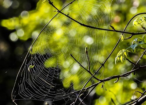 Spider Web B249809focPr