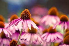 IMG_5009.jpg (Icedavis) Tags: flowers flower hockey minnesota special floralfriday mnsh