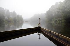 Early morning at Stockbridge Pond near Tilford, Surrey (Explored) (Simon Verrall) Tags: morning mist lake reflection water still fishing surrey explore farnham morningmist hambledon tilford stockbridgepond