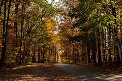 Hilton Area (11-10-16)-005 (nickatkins) Tags: fall fallcolors fallcolor fallfoliage autumn water sun sunlight stream