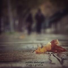 Falls apart (Mister Blur) Tags: fall leaves depthoffield low pointofview paris nikon d7100 bokeh autumn