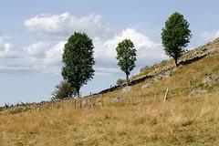 Trio d'arbres, Marchastel, Lozre, Languedoc-Roussillon (lyli12) Tags: arbre aubrac lozre languedocroussillon paysage landscape nuage ciel patrimoine france nikon d7000 tamronsp70200f28divcusd