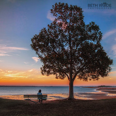Enjoying the View (Beth Wode Photography) Tags: sunset sundown dusk watching view tree wellingtonpoint redlands lowtide isthmus parkbench beth wode bethwode
