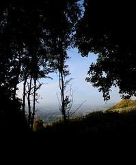 Dorking peeking through (smcnally24601) Tags: box hill national trust autumn fall surrey hills mist morning sunrise england britain