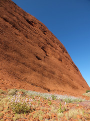 Smooth walls (LeelooDallas) Tags: australia northern territory flower blossom canyon ayers rock uluru yulara landscape dana iwachow fuji finepix hs20 exr olgas kata tjuta longitude 131