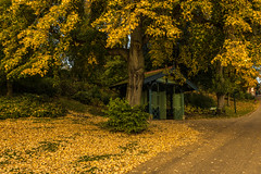 Autumn in Avenham Park (shabbagaz) Tags: great britain united kingdom 2016 a65 alpha autumn city england lancashire leaves miller north october park preston shabbagaz sony uk west greatbritain unitedkingdom