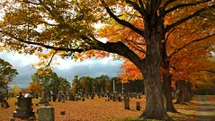 Autumn's Big Show (Smile Moon) Tags: color maple autumn fall indiansummer graveyard cemetery trees drive leaves