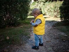 Caillou (Dahrth) Tags: gf1 gf120 panasoniclumixgf1 lumixmicroquatretiers lumixμ43 micro43 microfourthirds raw bébé baby yellow doudoune dawn jardin garden pebble stones
