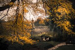 the forgotten park (bjdewagenaar) Tags: park nature trees autumn colors yellow minolta sony gorinchem gorcum holland dutch a58 alpha city urban raw lightroom