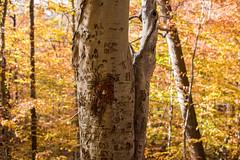 Hilton Area (11-10-16)-012 (nickatkins) Tags: fall fallcolors fallcolor fallfoliage autumn water sun sunlight stream