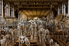 La dernière chevauchée (Meculda) Tags: squelettes musée paris france bâtiment intérieur histoire