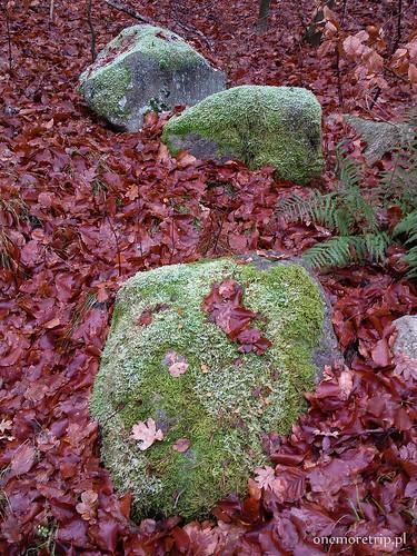 161111-135252-luboradza lasy