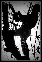 The Chainsaw (One Eye Coombs) Tags: chainsaw blackandwhite silhouette sunlight trees monochrome
