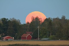 Fullmoon Rise, Countryside  Linkping Sweden, 16 Sep 2016 (IMG_5244Abr2) (Johan Kleventoft) Tags: moon moonlight fullmne fullmoon moonrise countryside landscape linkping sweden barn mne stergtland trees sky orange house