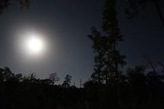 Moon Silhouette (brickbuilder711) Tags: florida sebring highlands hammock state park nature night moon sky stars orion hunter constellation natural trees slash pine