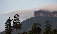 Jalgumbun / Mount Lindesay (dustaway) Tags: mountain cloudcap mountlindesay jalgumbun australianmountains hooppines rainforest dairyflat richmondvalley northernrivers nsw australia landscape