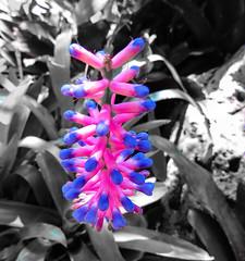 Flower (nadine3112) Tags: sandiego blumen balboapark colorkey botanicalbuilding colorkeying
