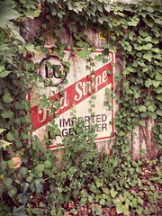 Red Stripe (Dave* Seven One) Tags: old beer overgrown sign metal fence vines rust rusty ivy vine beat lager metalsign lagerbeer tinsign samsunggalaxys4