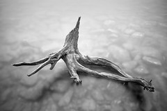 Eagle Lake driftwood detail (Nate Parker Photography) Tags: longexposure blackandwhite fog landscape maine newengland driftwood acadia mainecoast mountdesertisland mdi acadianationalpark haveaniceday nateparkerphotography maineseascapes