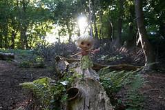 tree trunk balancing