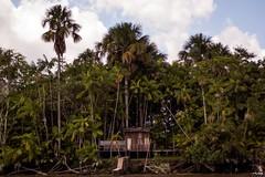 Manso; (mendigodrogado) Tags: nature brasil d50 50mm nikon natureza nikkor f18 18 par belm