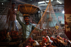 Chicken sellers (Lil [Kristen Elsby]) Tags: travel chickens topf25 topv2222 asia market poultry editorial dhaka livestock bangladesh chickenseller southasia bangladeshi travelphotography chickenmarket documentaryphotography canon5dmarkii
