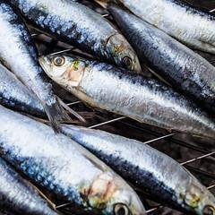 Sardines on the BBQ (aida_dasilva) Tags: fish dinner bbq sardines simpleeating