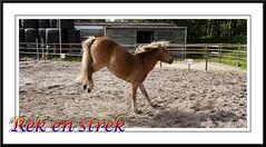 Rek en strek (gill4kleuren - 11 ml views) Tags: life horse me sarah fun outside happy running gill saar paard haflinger
