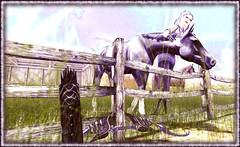 """The Centaur"" (LoneSolitarian) Tags: life light shadow people horse woman art nature girl beauty female dark landscape photography photo 3d model scenery feminine avatar gimp charm romance sagittarius sl human secondlife virtual attractive second lone serene zodiac lovely sim firestorm centaur windlight frisland lalunaisland"