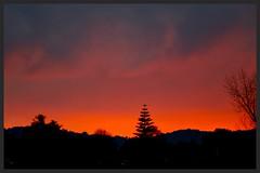 West Auckland Sunset (Zelda Wynn) Tags: trees sunset nature weather clouds newlynn westauckland zeldawynnphotography