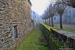 Camino verde (alanchanflor) Tags: frío canon verde camino francia invierno muro niebla hdr exterior color