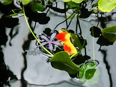 Flower in Abstract Water