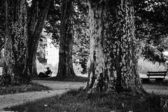 absorbed (Yves Schlunegger) Tags: street blackandwhite bw white black streetphotography yves moment schwarzweiss tbingen platanenallee schlunegger