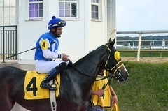 "2014-09-18 (14) r3 Carlos Luis Guterriz on #4 Royal Shaft (JLeeFleenor) Tags: photos photography marylandracing marylandhorseracing md laurelpark laurelracecourse ljockey جُوكِي ""赛马骑师"" jinete ""競馬騎手"" dżokej jocheu คนขี่ม้าแข่ง jóquei žokej kilparatsastaja rennreiter fantino ""경마 기수"" жокей jokey người horses thoroughbreds equine equestrian cheval cavalo cavallo cavall caballo pferd paard perd hevonen hest hestur cal kon konj beygir capall ceffyl cuddy yarraman faras alogo soos kuda uma pfeerd koin حصان кон 马 häst άλογο סוס घोड़ा 馬 koń лошадь bay maryland"
