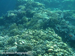 Red Sea, Marsa Alam, Egypt (IRIS DE KONING PHOTOGRAPHY) Tags: ocean sea fish coral redsea sealife reef